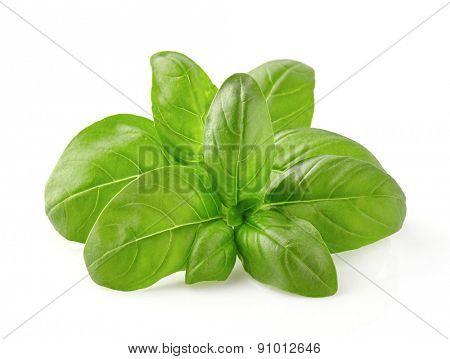 Basil spice