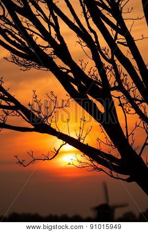 Tree branches in detail with sunset sky on background