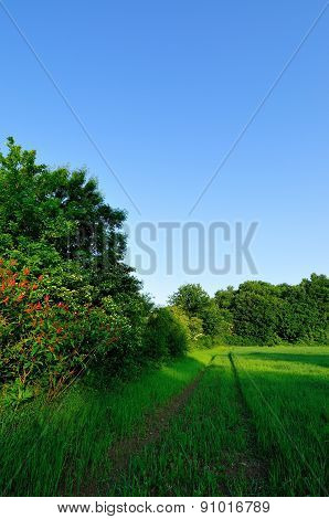 Wheat field and forest