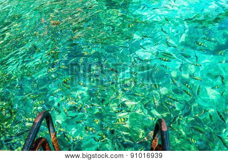 Colorful fish in azure water, Thailand