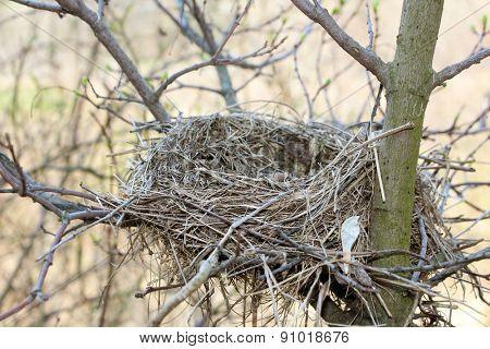 Bird nest in the branches