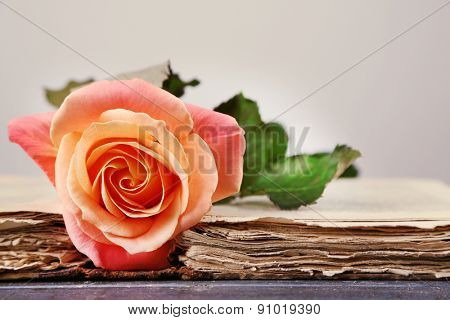 Tea rose with open old book on light background
