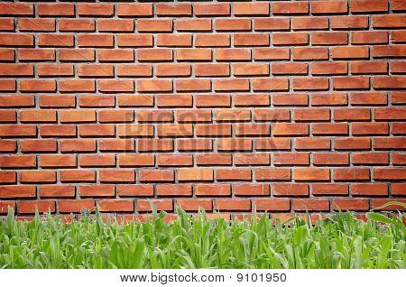 Green Grass Infront of Brickwall Pattern