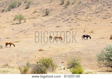 Horses On A Hillside