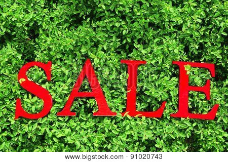Sale on green background