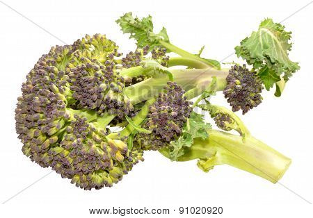 Purple Headed Broccoli