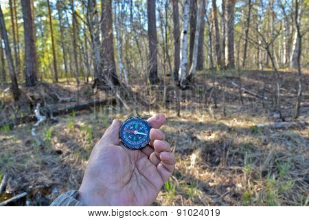 With Compass In A Spring Forest.