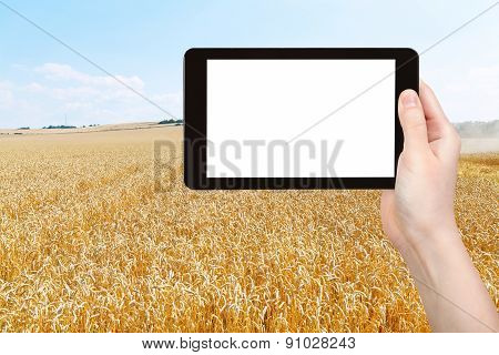 Photo Of Harvesting Of Ripe Wheat Field
