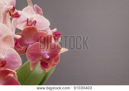 A Pink Orchid Blossom With Green Leafs