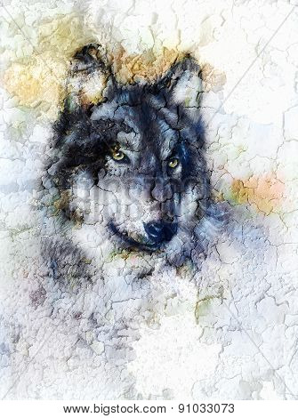 Illustration Portrait Of A Wolf, Crackle Background