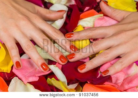 Beautiful hands with a nice manicure. Gel nails are covered with red polish.