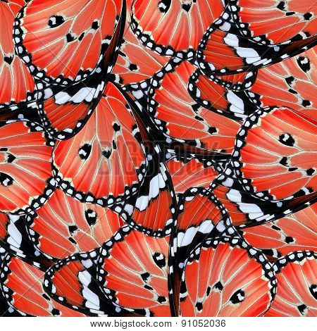Exotic Red Butterfly Wing