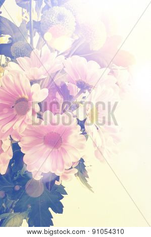 Vintage Gerbera daisy background with retro effect