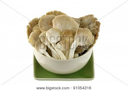 A bowl of fresh Indian Oyster (Phoenix) Mushroom isolated on white
