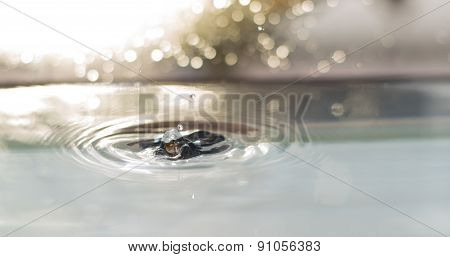 Water Droplet Landing In Water