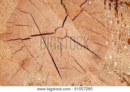 The Texture Of The Wood Slice Cruba