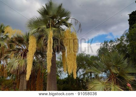 Palm Trees In Tropical Garden