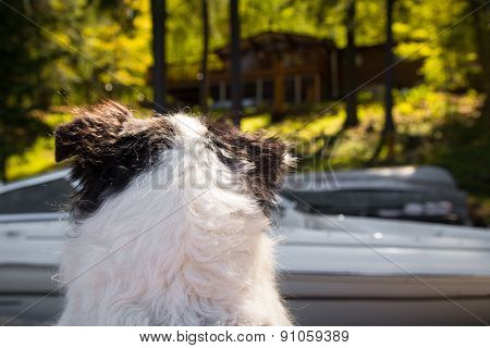 Dog Watches Cottage
