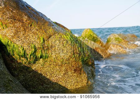 Stones With Moss In The Surf.