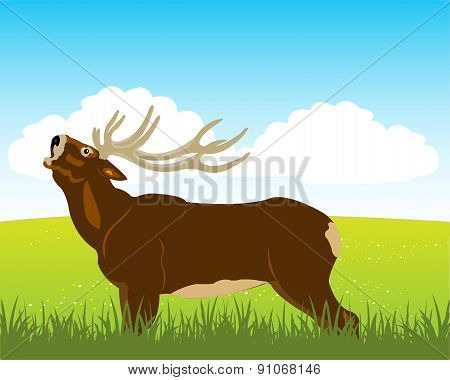 Wild deer on field