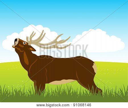 Wild deer on field