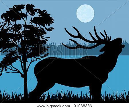 Silhouette of the deer