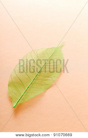 Texture, details. Leaf on the table