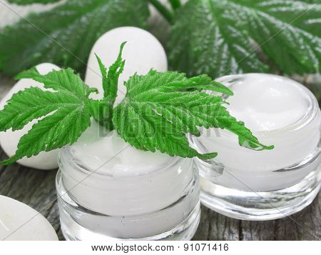 organic cosmetics, facial cream fresh as green leaves