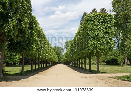Tree-lined Avenue