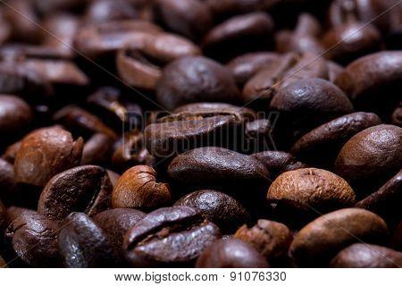Freshly Roasted Coffee Beans In Narrow Focus