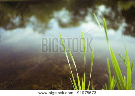 Blurred green and lake May