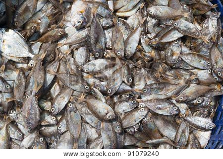 Dead Fishes in Basket