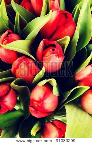 Colorful bouquet of fresh spring tulip flowers