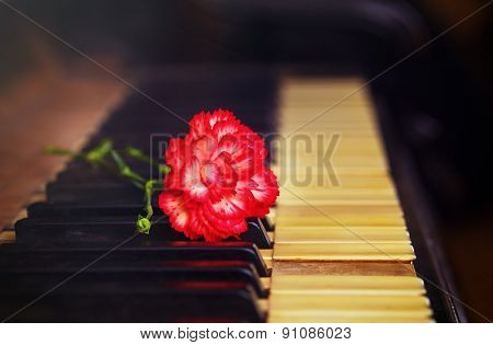 Old Vintage Gand Piano Keys With A Red Carnation Flower, Vintage Picture