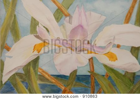 Painting Of Iris By Ocean