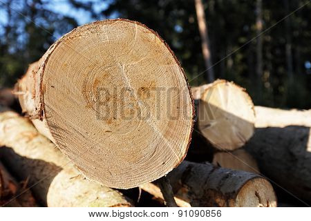 Pile of wood in edge of the forest