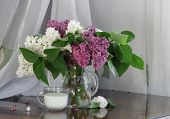 foto of jug  - Lilac bouquet in a transparent jug and a cup with milk - JPG
