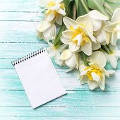 pic of daffodils  - Bright white daffodils flowers and empty notebook on turquoise painted wooden planks - JPG