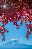 foto of mount fuji  - Mount Fuji and autumn maple leaves Kawaguchiko lake Japan - JPG