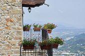 pic of geranium  - photo of a flowers of geranium inside a balcony - JPG