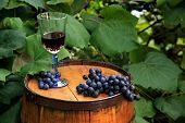 picture of vines  - A single crystal glass of wine is placed on an old - JPG