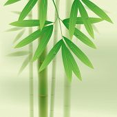 pic of bamboo leaves  - Bamboo stems and leaves on light green background - JPG