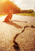 foto of lost love  - Lost dog sitting on the road alone - JPG