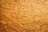 pic of hairy  - hairy texture of coconut in macro view - JPG