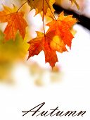 stock photo of fall decorations  - Background with open space made with autumn leaves - JPG