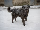 stock photo of stray dog  - Hungry stray dog during a snowstorm - JPG