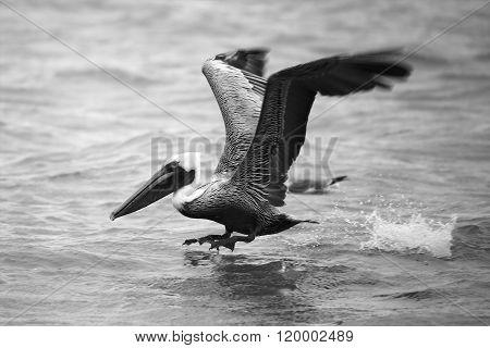 Pelican Landing At Everglades
