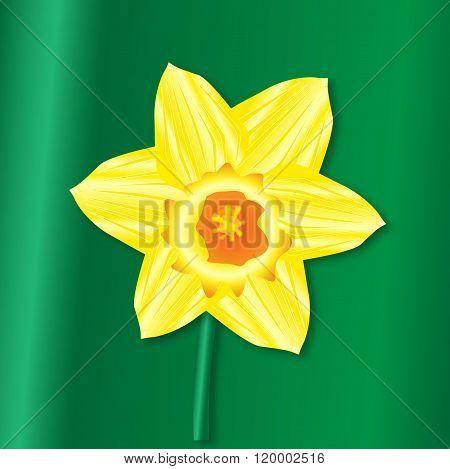 Daffodil Saint Davids Day