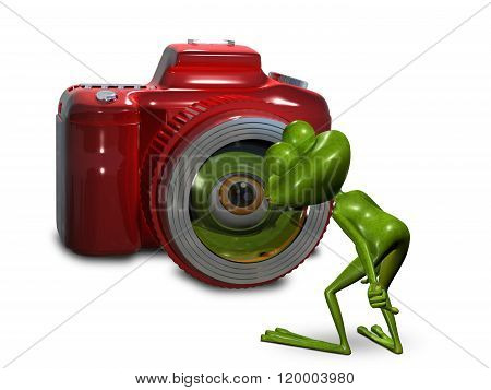 Frog In Front Of The Camera