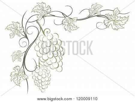 Vine, grapes